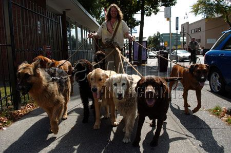 A professional dog walker pilots his way down Commercial Street in Vancouver, British Columbia, Canada.